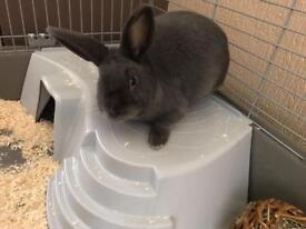 Free Rabbit for adoption