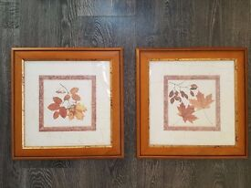 Framed prints - Leaf Study 1 &2 by John House
