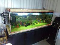 6ftx2ftx2ft tank and fish