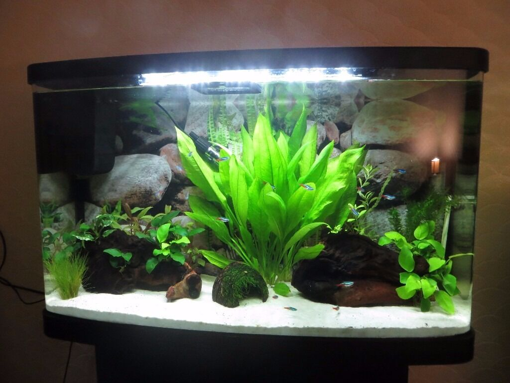 Freshwater aquarium fish no heater - Interpet Aquarium Fish Tank 87 Litres 30 X 75 X 45 Cm