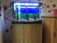 Marina vue fish tank 60l and cabinet