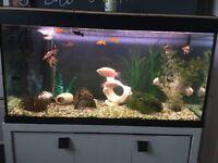 200litre fishtank and fish