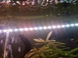 Heaters and lights for fish tank.
