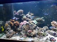 Marine fish tank,equipment, corals, fishes, life rock