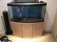 Fluval Valencia 260L tank Aquarium