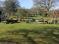 CUT PRICE PLANTS, SHRUBS, MOTHERS DAY FLOWERS, PULBOROUGH