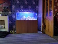 300 litre Marine Fish Tank and System (less than one year old)
