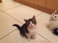 4 Adorable Fluffy Kittens