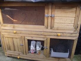 male rabbit and guinea pig male and two tier hutch