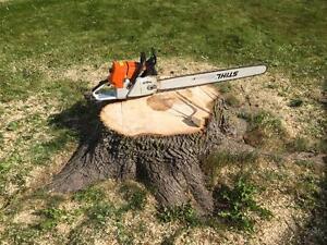 GTA's #1 TREE STUMP REMOVAL