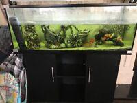 4ft fish tank with unit & fish, pleck, filters & light