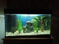 Juwel Rio 125 Aquarium Fish Tank