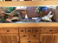 Reptile vivarium reptile set up hand made
