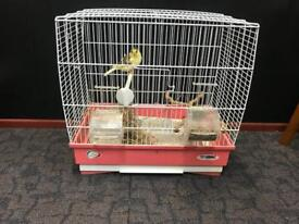 Two canaries and cage for sale
