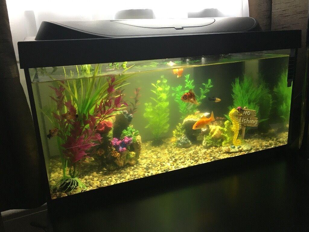 Aquarium fish tank northamptonshire - Aquarium Tetra 54l New Starter Kit