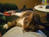 FREE - 4 years old cat to good loving home !