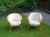 Pair of Varnished Cane / Bamboo Circular Conservatory Bucket Chairs with Cushions . Can Deliver.