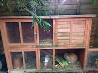 Bunny rabbit & cage for sale