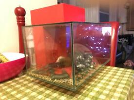 Fluval edge 23l red fish tank