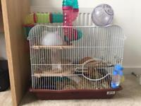 Dwarf hamster with large cage