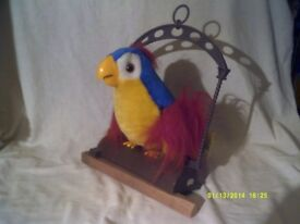 A PARROT that ANSWERS BACK , NO CAGE , SEED or CLEANING OUT NEEDED ? ? ? +++++++