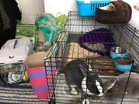 Rabbit cage and equipment