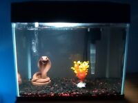 Fish R Fun Aquarium Fish Tank With Extras