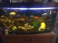 Aquarium fish tank and Malawi's