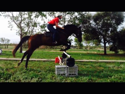 looking for horse riding instructor for an intermediate rider Armidale Region Preview
