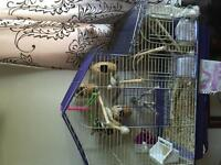 7 finches with cage and tools for $75
