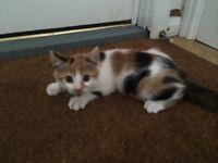 Stunning affectionate payfull kittens, ready to go to new loving homes! 3 left