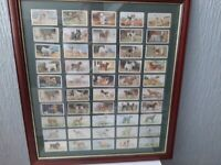 1930s cigarette cards of dogs