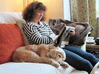 REGINA & TONY'S DOG HOME-BOARDING. £20 per 24 hrs. Family home. Constant company. 2 walks a day.