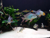4 ft fish tank FULL SETUP - MUST SEE