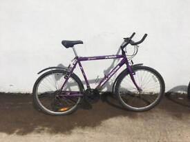 Men's purple bicycle