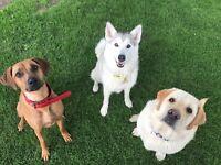 Bark & Ride Pet Services