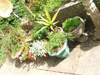 various pots with various plants