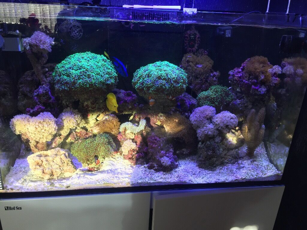 red sea reefer 250 aquarium complete with all equipment. Black Bedroom Furniture Sets. Home Design Ideas