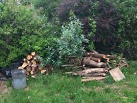 Chopped wood/ logs - free to collect