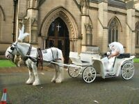 WHITE HORSE WEDDINGS - A HORSE AND CARRIAGE FOR YOUR SPECIAL DAY - WEDDINGS, COMMUNIONS, BIRTHDAYS