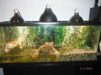 Lizard Tank & All Accessories...price reduced