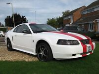 stunning ford mustang not for the shy