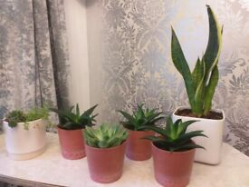 Selection of indoor plants