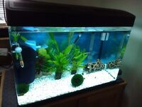 Fish Tank 100 Ltrs 8 mths old Panoramic