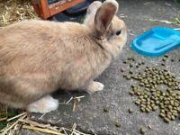 Hutch &Rabbit