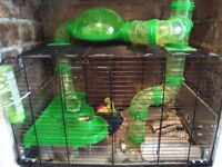 Two lovely male gerbils, with cage, food, bedding and two exercise balls.