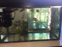 2 ft fish tank complete set up including tropical jewels