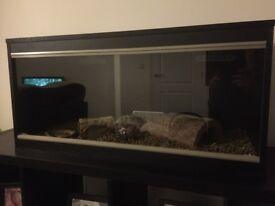 Vivexotic Repti-Brand New reptile tank- Home Vivarium - Medium Black 86x37.5x42cm