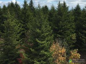 9 500$ - Terre à bois à vendre à Paspebiac