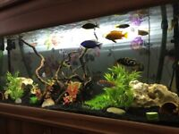 4ft fish tank with stand and hood